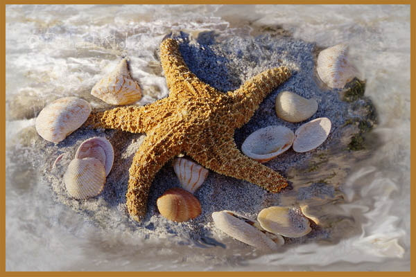 Starfish & Shells