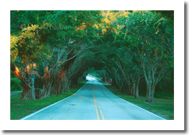 bridge-road-hobe-sound-F067
